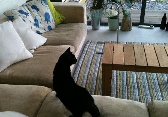 How to get rid of pet cat urine smell from your Sofa and Carpet?